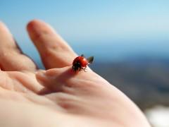 虫がドローンに巻き込まれてしまう事故が多発する季節。